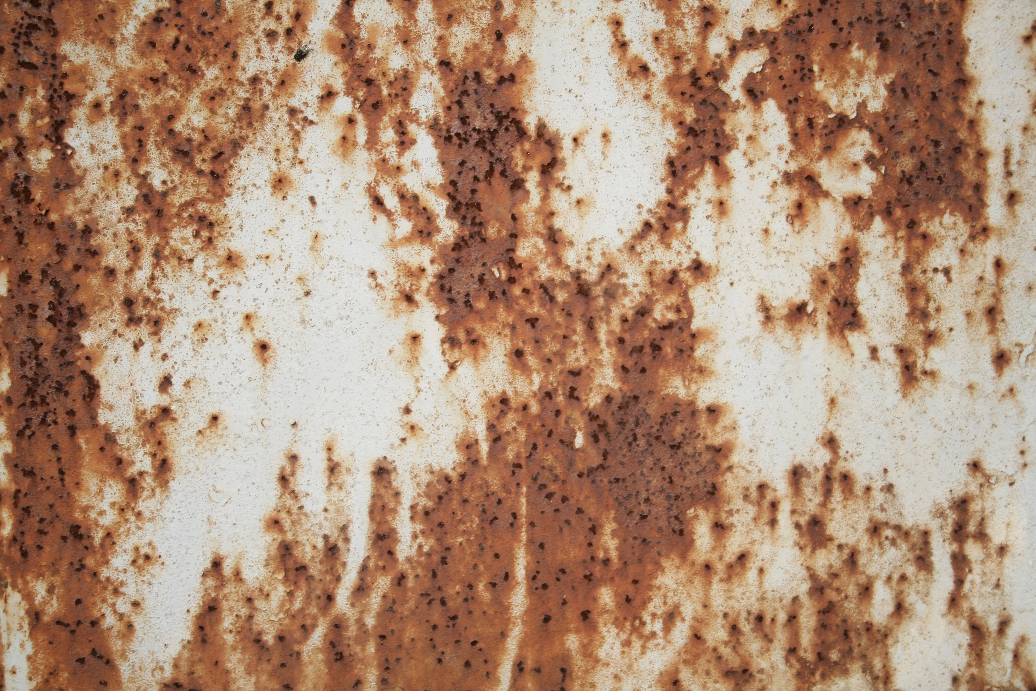 Rusty white and brown metal texture | Textures for ...