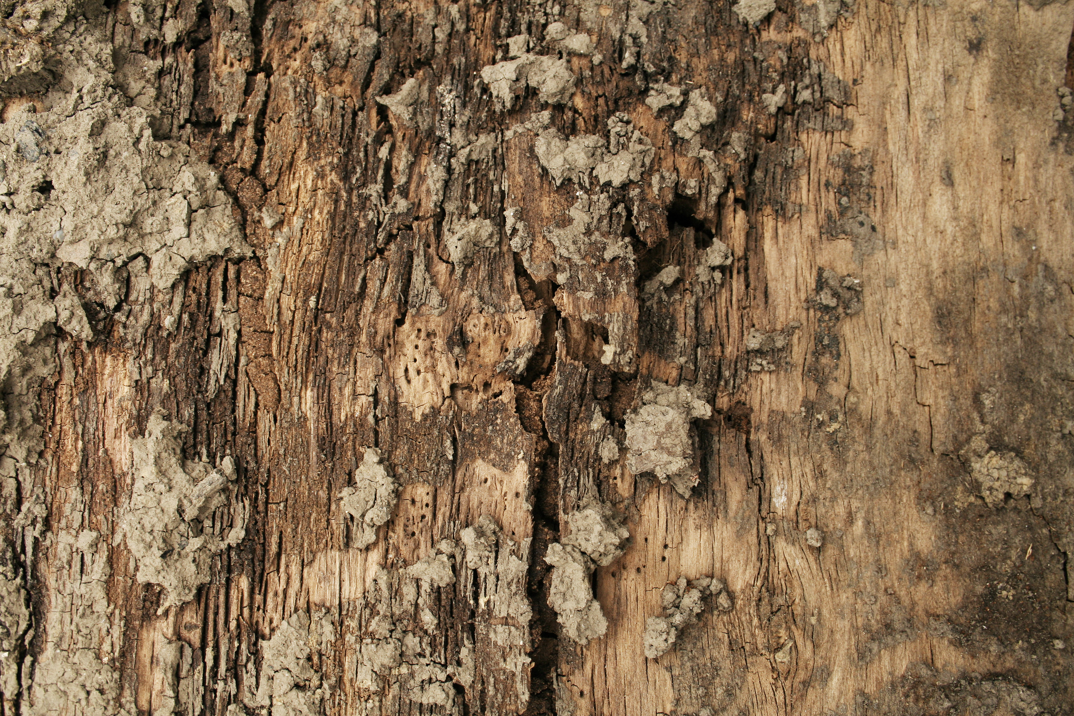 Wooden Post Texture free stock wood textures,tree bark, cg textures, free download