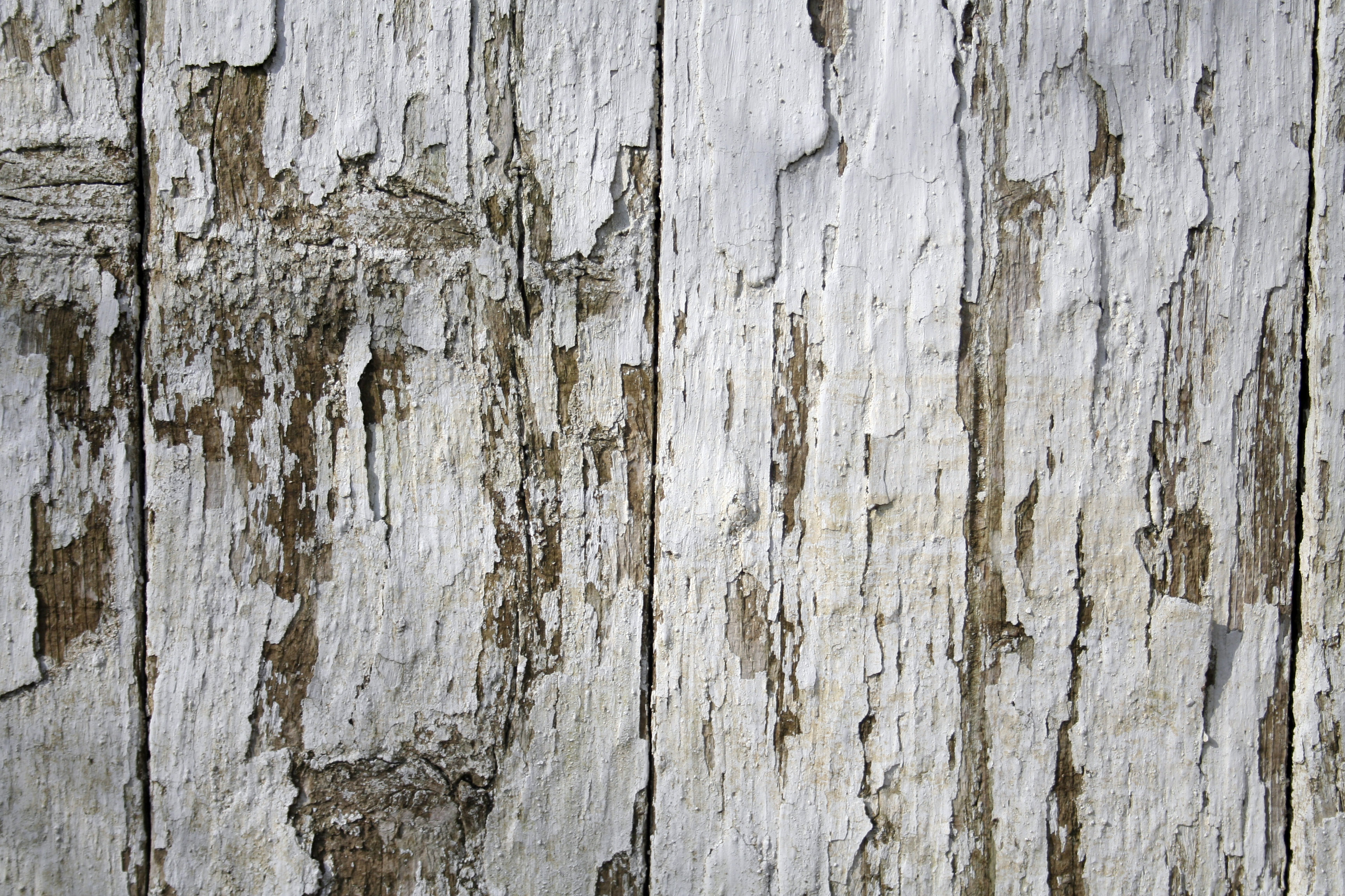 birch tree wallpaper grey