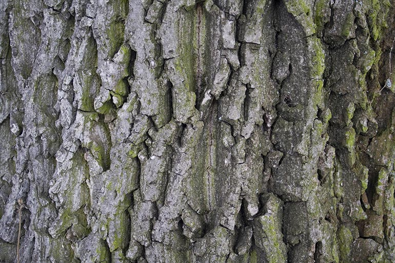 Tree bark, premium and free stock texture