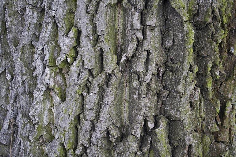 Tree bark, premium and free stock texture