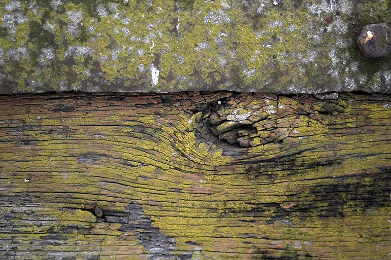 Old Wood with moss texture – free download