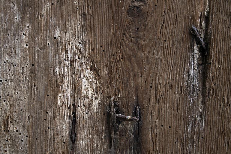 Old worn wood texture free for work