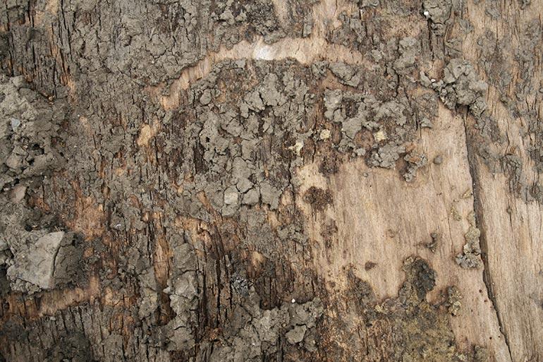 Tree bark texture close – free download