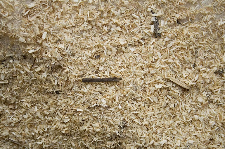 Sawdust texture – free download