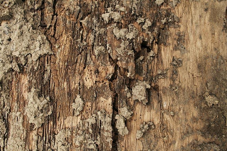 Brown wood tree bark texture
