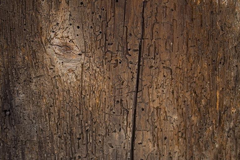 Wood, decayed wood texture