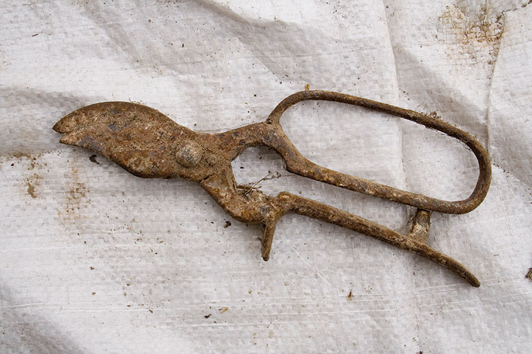 Rusty vintage secateurs