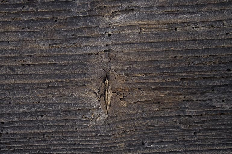 Decayed brown wood closeup texture