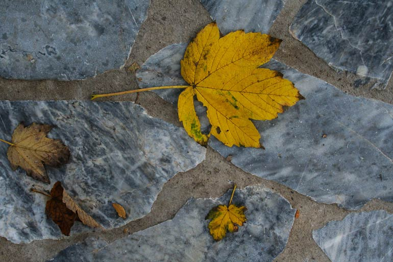 autumn-leaves-medium-2