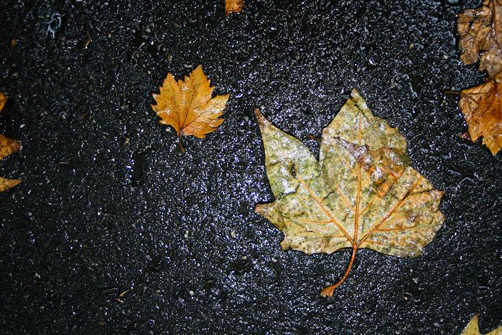 autumn-leaves-texture-medium-1