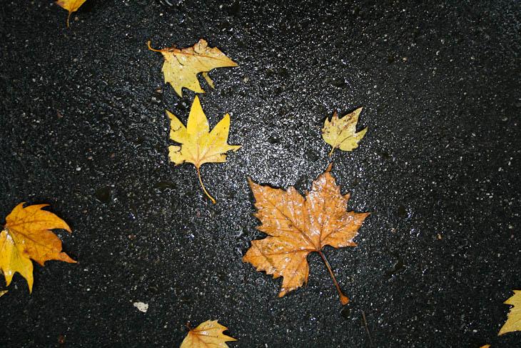 autumn-leaves-texture-medium-2