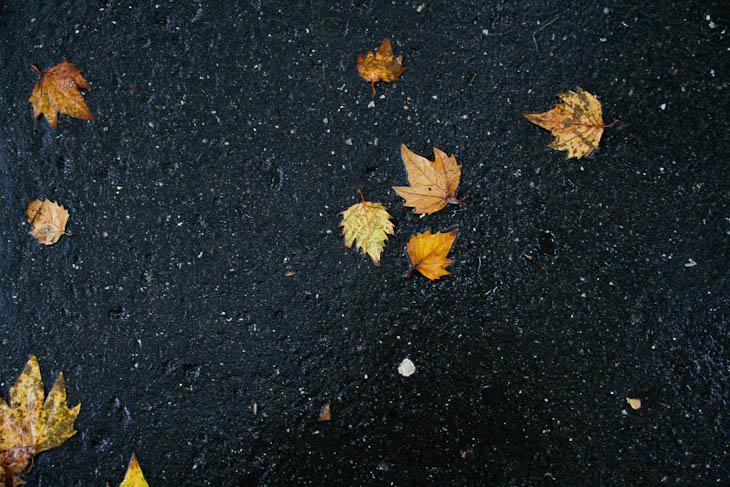 autumn-leaves-texture-medium-3