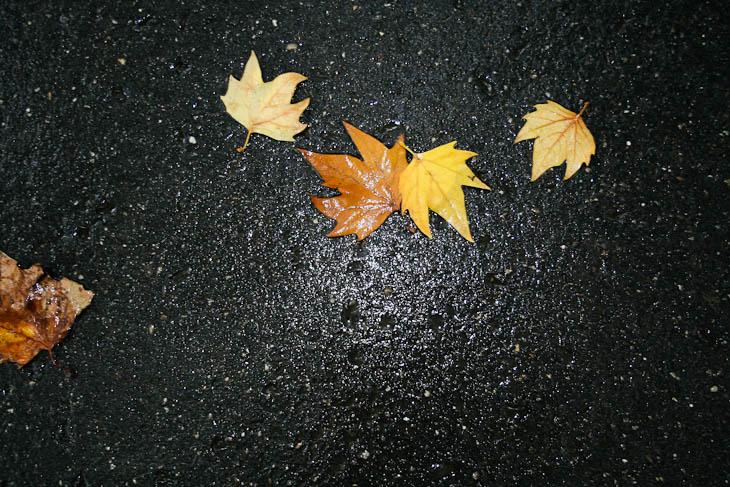 autumn-leaves-texture-medium-4