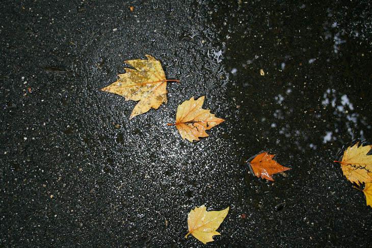 autumn-leaves-texture-medium-5