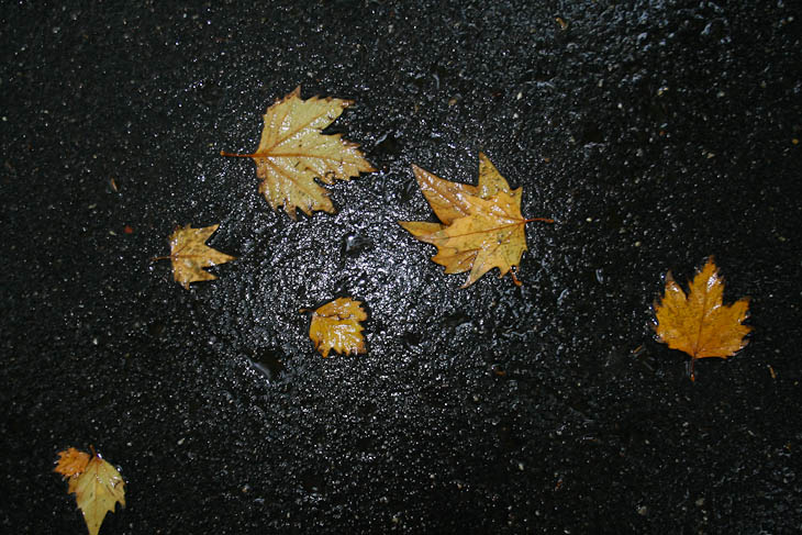 autumn-leaves-texture-medium-6