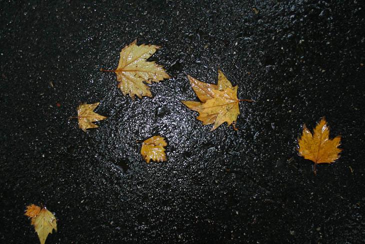 autumn-leaves-texture-medium-6
