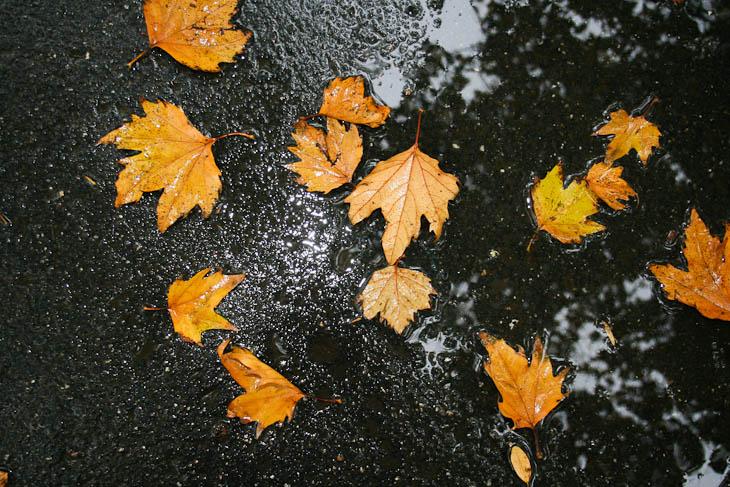 autumn-leaves-texture-medium-7