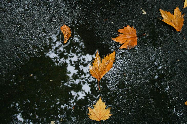 autumn-leaves-texture-medium-8