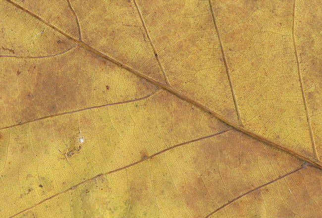 Download brown leaf texture