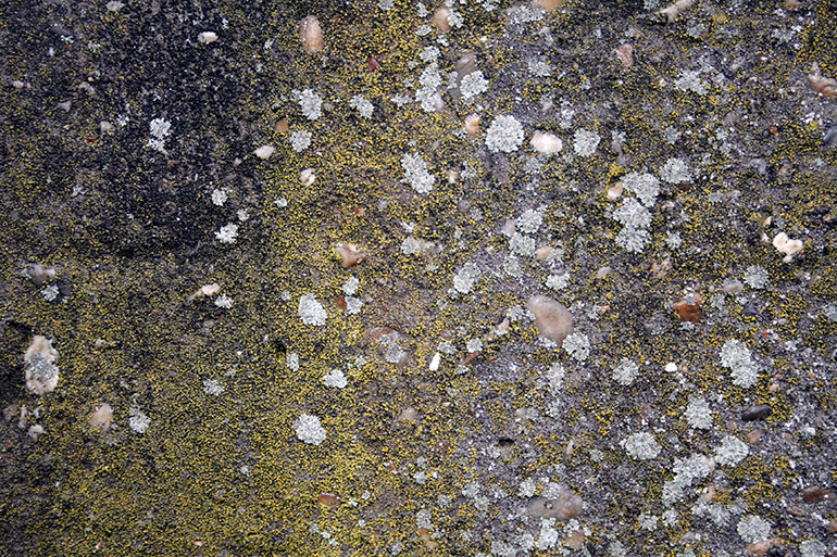 Texture with moss and lichen