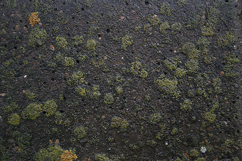 Wet concrete texture with moss