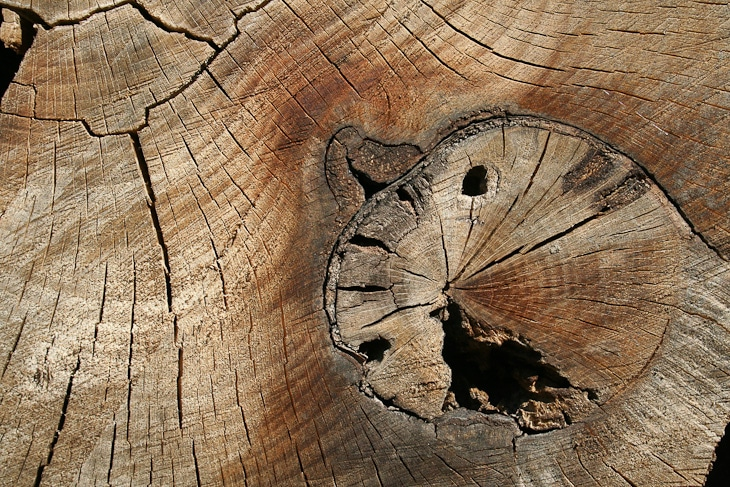 cracked-wood-texture-4