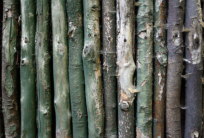 Green painted old wood fence texture
