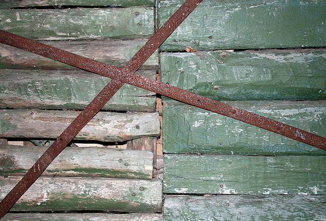 Green wood wall with branch, premium texture