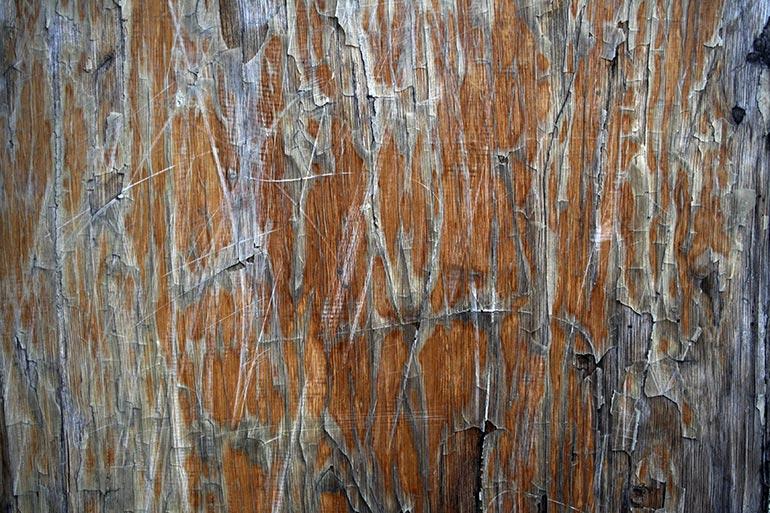 Grunge, Cracked Wood texture