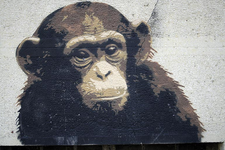 Grunge monkey painting in a wall