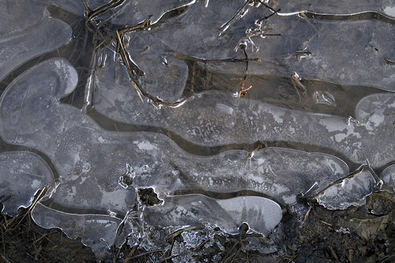 Ice texture with some root