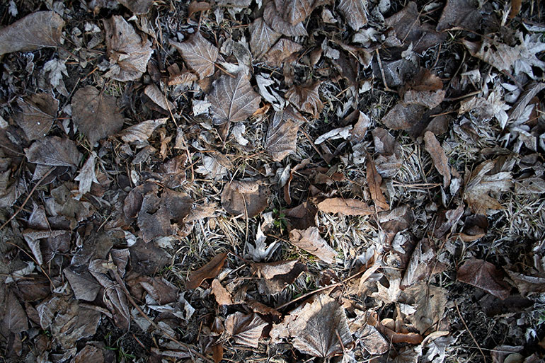 Brown fallen leaves textures