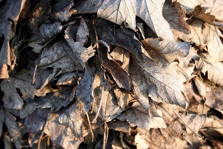 Leaf free stock texture