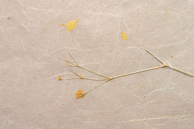 Yellow manual paper with flower free download texture