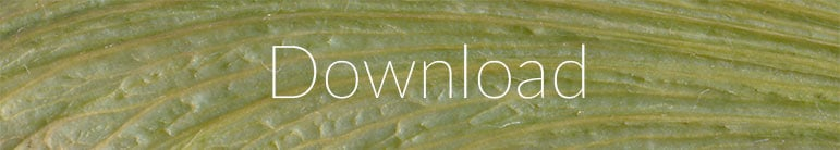 mapple-seeds-close-texturepalace-down
