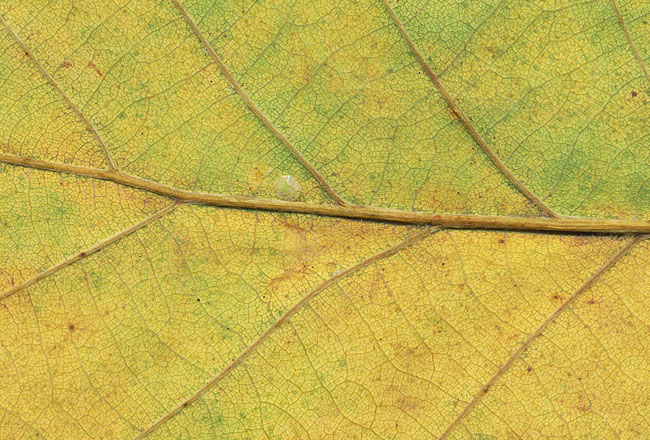 Leaf texture – with  colors