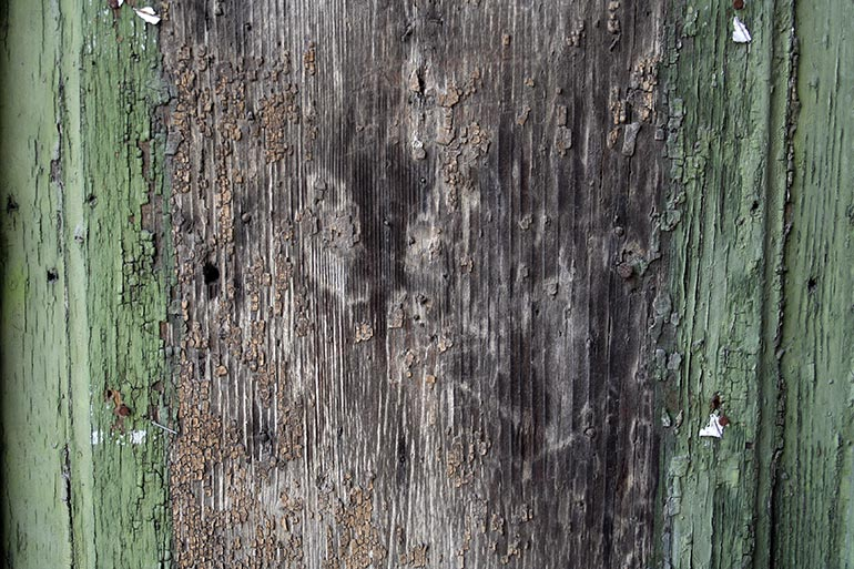 Old painted green wood texture