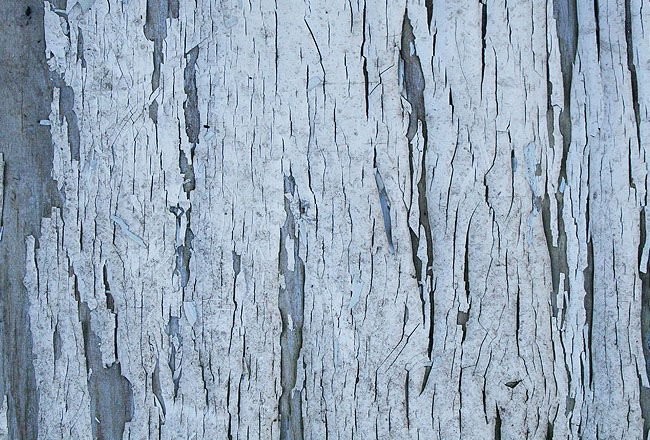 Wood texture with cracked white paint